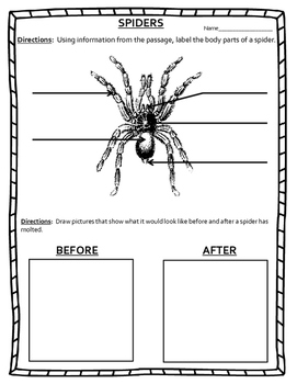 Mini-Unit - Spiders and Insects - Informational Text