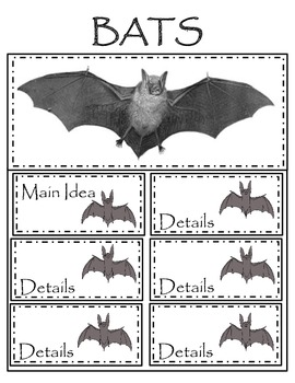 Spiders and Pumpkins, and Bats....Oh My!