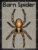 StoryTown Lesson 27 {Spiders and Their Webs - 3rd Grade}