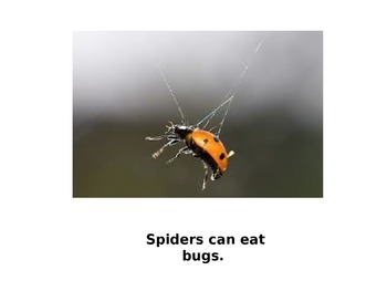 "Spiders ""can"" ""have"" ""are"" story"