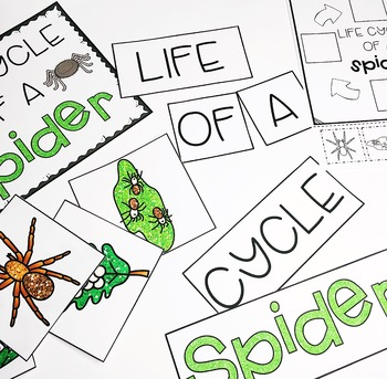 Spiders for the Primary Classroom