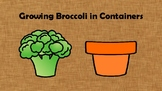 Container Gardening:  Growing Broccoli from Seeds