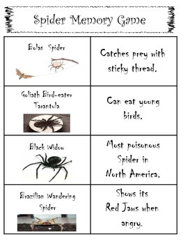 Spinning Spiders: Common Core Comprehension Packet
