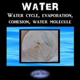 Water: Water Cycle, Evaporation, Cohesion