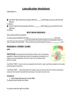 Split Brain Research - AQA Biopsychology