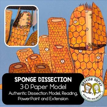 Sponge Dissection - 3-D Paper Model