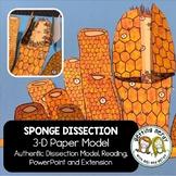Sponge Paper Dissection - Scienstructable 3D Dissection Mo
