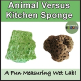 Ocean Science Sponge Experiment
