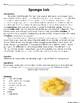 Sponge Laboratory Experiment