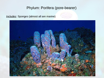 Sponge Notes Powerpoint