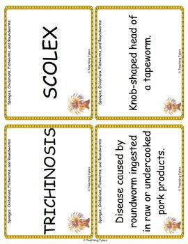 Sponges Cnidarians Flatworms Roundworms Vocabulary Cards