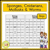 Sponges, Cnidarians, Mollusks and Worms BINGO