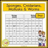 Sponges, Cnidarians, Mollusks and Worms BINGO
