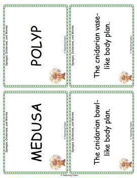 Sponges Cnidarians Worms Vocabulary Cards