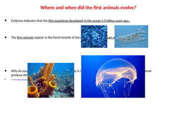Sponges, Cnidarians, and Worms