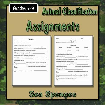Sponges Teacher Notes & Assignment