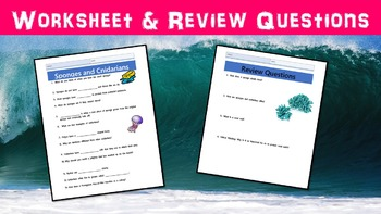 Sponges and Cnidarians Lesson with Power Point, Worksheet, and Review Page