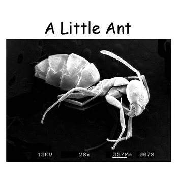 Insect Images Enlarged by a Scanning Electron Microscope - STEM Resource