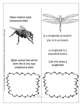 Spotting Insects - Read, Count and Draw