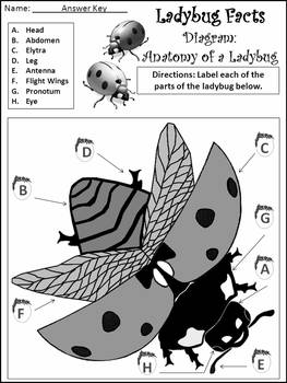 Spring-Summer Science Activities: Ladybug Facts Science Activity Packet