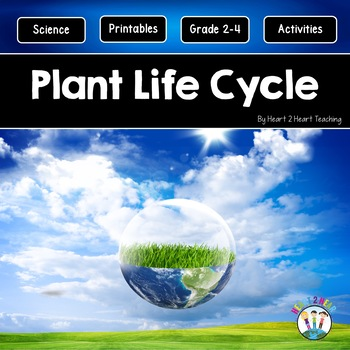 Spring Activities: All About Plants | Life Cycle of a Plant | Photosynthesis