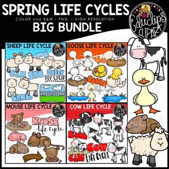 Spring Animals Life Cycles Clip Art Big Bundle {Educlips Clipart}