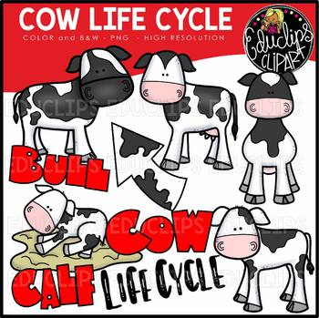 Spring Animals Life Cycles Clip Art Collection (4 sets) {Educlips Clipart}