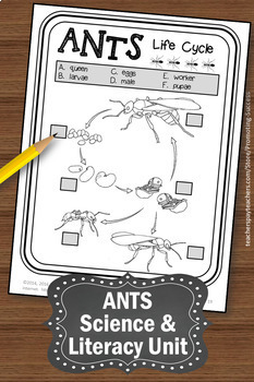 Download: Graphic Organizers to Help Kids With Writing