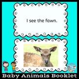 Spring Baby Animals Book