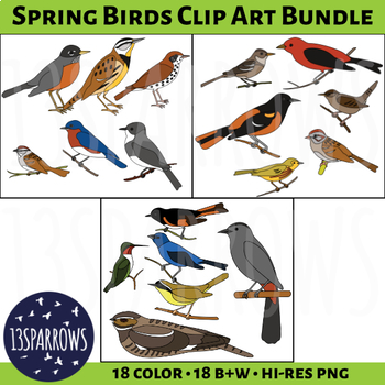 Spring Birds Clip Art Bundle