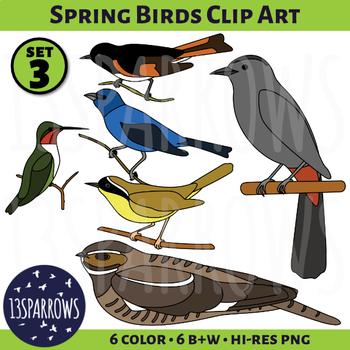 Spring Birds Clip Art, Set 3