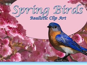 Spring Birds Realistic Clip Art