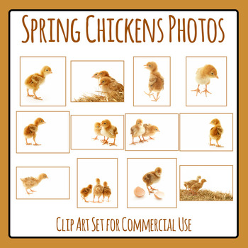 Spring Chickens Photo Clip Art Set for Commercial U se
