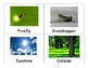 Spring Compound Words