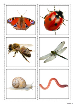 Spring Vocabulary Photo Flashcards for Special Education