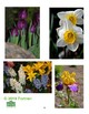 Spring Floral Garden Visual Art lesson for grades 3 to 9