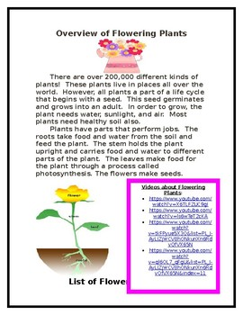 Spring Flowering Plant Research Packet for Second Grade