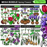 Spring Flowers Life Cycle Clip Art BUNDLE (Spring flowers