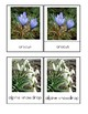 Spring Flowers Montessori 3-Part Cards