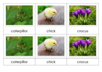 Spring Montessori 3-Part Cards