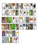 Spring Picture Vocabulary Word Wall Cards and Individual Word Wall