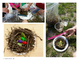 Spring: Robins Informational for Primary Grades and Build a Nest Challenge