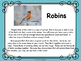 Spring: Robins Reading for Upper Elementary Grades and Build a Nest Challenge