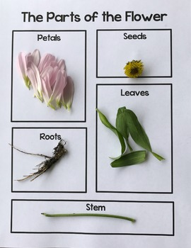 Spring Science Activities