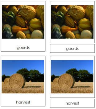 Autumn Season: 3-Part Cards