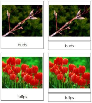 Spring Season: 3-Part Cards
