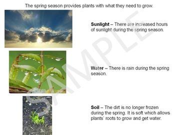 Spring Season PowerPoint & Emergent Reader Bundle