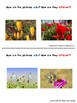 Spring Turn and Talk Cards - Compare and Contrast - Great for ELLs