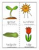Spring Vocabulary Flash Cards