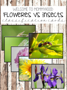 Spring activities: Insect versus flowers sorting cards